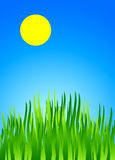 Summer. Green grass with blue sky and sun Royalty Free Stock Photo