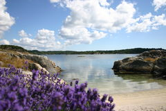 Summer. In norway Royalty Free Stock Photo