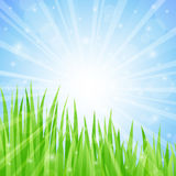 Summer Abstract Background with grass. Royalty Free Stock Images
