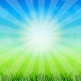 Summer Abstract Background with grass Stock Images
