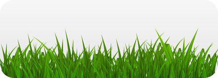 Summer Abstract Background with Grass. Vector Illustration. Stock Photo
