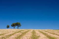 Summer abstract landscape. With three trees and straw royalty free stock images