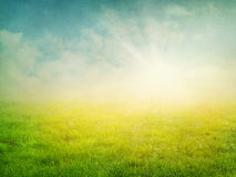 Summer  abstract nature background Stock Photos