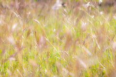 Summer abstract nature background with grass in the meadow. Stock Images
