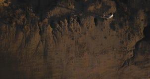 summer achtergrond Het land op de berg Hoogste mening 4k hommelvlucht Luchtestablisher stock videobeelden
