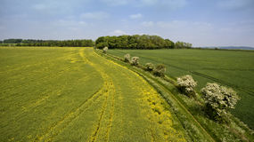Summer aerial panorama of rapeseed, wheat farm fields Stock Image