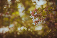 Summer afternoon moment Royalty Free Stock Image