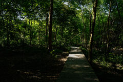 Summer afternoon sunlight on planked path in flourishing woods Royalty Free Stock Images