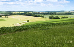 Summer agricultural landscape Royalty Free Stock Photography