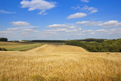Summer agricultural landscape Royalty Free Stock Images