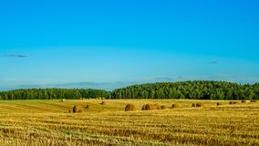 Summer agricultural landscape. a grain field after harvesting with bales of dry straw under a clear blue sky. Beautiful summer agricultural landscape. a grain Royalty Free Stock Photography