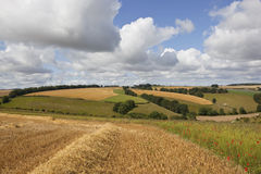 Summer agricultural landscape Stock Photography