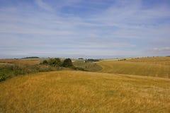 Summer agricultural landscape Royalty Free Stock Image
