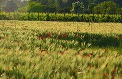 Summer agriculture landscape Stock Images