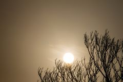 In summer, the air dry and hot of the sun at the back of the branches. In the summer. Air dry and heat of the Sun on the back of twigs royalty free stock image