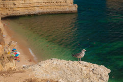 Summer in Algarve coast, Portugal. Rocks in the shoreline and blue water Royalty Free Stock Photo