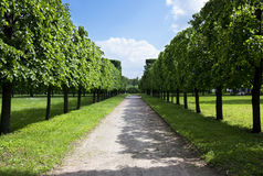 Summer alley in a green park Royalty Free Stock Image