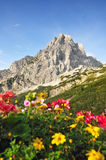 Summer alp mountains. Alp mountains with flowers, summit of Spitzmauer, Totes Gebirge, Austria royalty free stock photos
