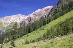 Summer alpine mountain landscape Stock Photo
