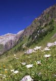 Summer alpine mountain landscape stock image