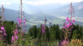 Summer in the Alps stock video