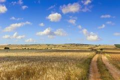 SUMMER.Alta Murgia Nationa Park: field of wheat. - (Apulia) ITALY- Stock Image