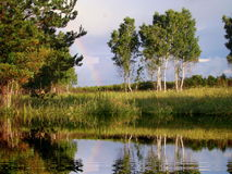 Summer in Altai. The hot summer came to forest-steppes of Altai Stock Photo