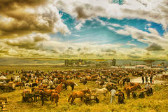 Summer animal market fair in Eastern Europe Stock Photos