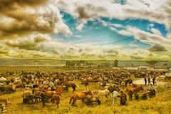 Summer animal market fair in Eastern Europe stock photos