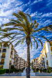 Summer apartments condominium on the Mediterranean seaside with a palm tree in front Stock Image
