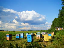 Summer on an apiary. The apiary costs in the steppe for the main medosbor Stock Photo