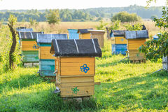Summer apiary with several hives Stock Images