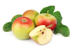Summer apple fruits Royalty Free Stock Image