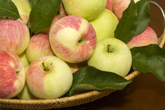 Summer apples closeup Royalty Free Stock Image
