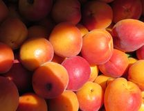 Summer Apricots Royalty Free Stock Photos