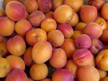 Summer Apricots Royalty Free Stock Images