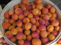Summer Apricots Stock Images