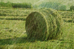 Summer autumn hay Royalty Free Stock Photography