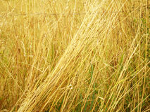 Summer autumn hay Stock Images