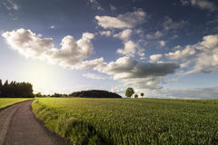 Summer or Autumn Landscape. Summer or Autumn Sunset Landscape royalty free stock images