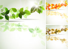 Summer and  autumn leaves Stock Photos