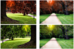 Summer and autumn park Stock Photography