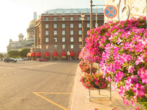 Summer-autumn in Saint Petersburg. St. Isaac`s square illuminated by the evening sun. Tubs with blooming petunias on the streets. St. Isaac`s square illuminated Stock Images