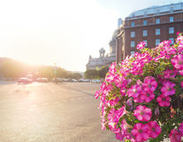 Summer-autumn in Saint Petersburg. St. Isaac`s square illuminated by the evening sun. Tubs with blooming petunias on the streets. St. Isaac`s square illuminated Stock Photos