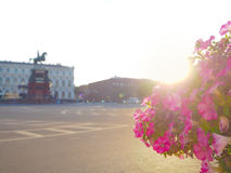 Summer-autumn in Saint Petersburg. St. Isaac`s square illuminated by the evening sun. Tubs with blooming petunias on the streets. St. Isaac`s square illuminated Royalty Free Stock Photography