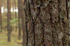 Summer, autumn in wild forest. Summer , autumn in wild forest, background Stock Photography