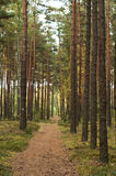 Summer, autumn in wild forest. Summer , autumn road in wild forest Stock Images
