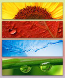 Summer, Autumn, Winter, Spring. The four seasons represented by four images Stock Images
