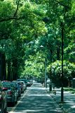 Summer avenue of Sichuan University. Sichuan University is always be covered with hundreds of canopies in summer which delivers a stream of freshness to walking royalty free stock image