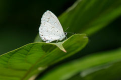 Summer Azure Royalty Free Stock Photography